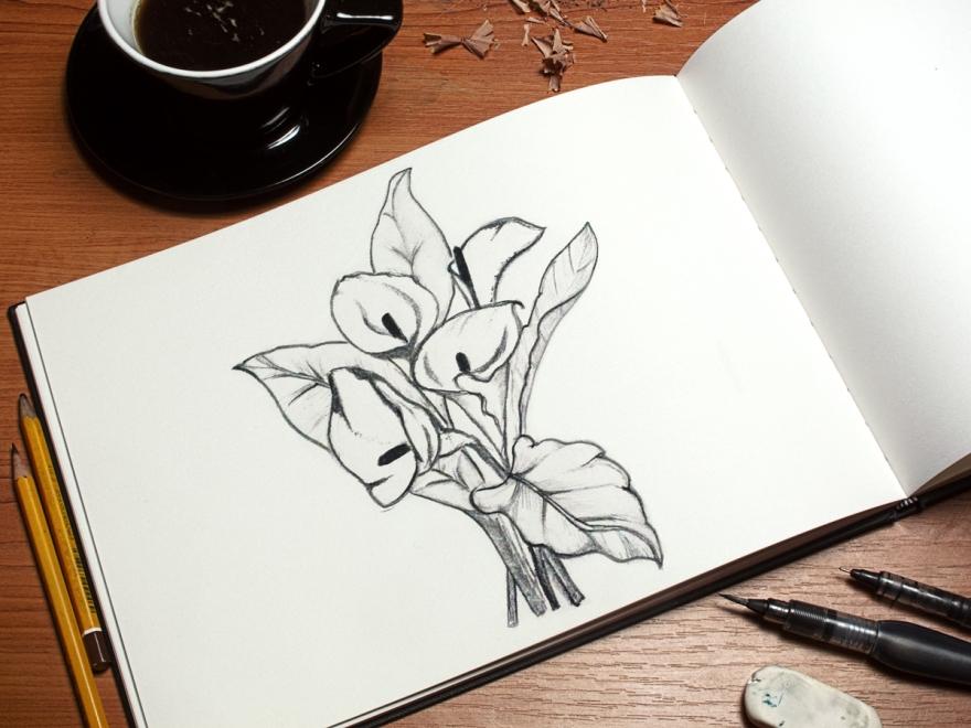 calas-dibujo2